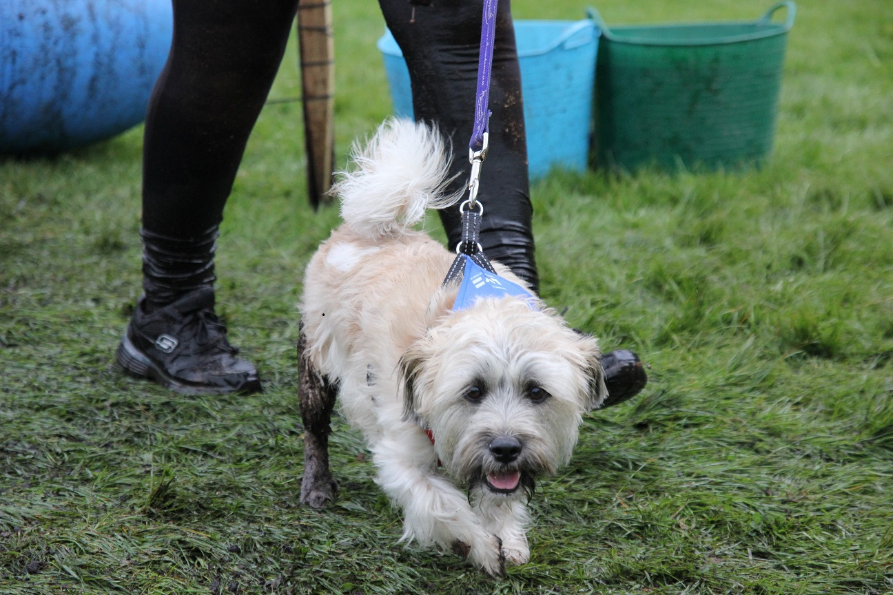 Battersea Cats And Dogs Home Opening Times